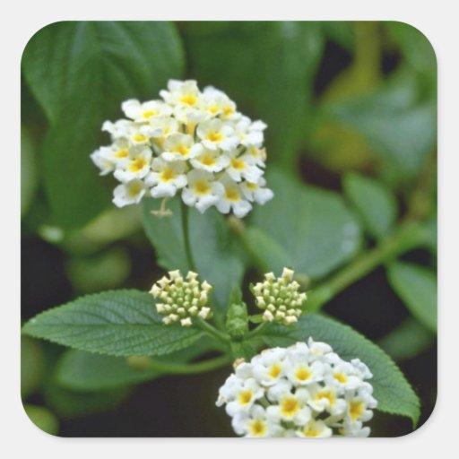 Flores blancas agrupadas con la flor amarilla de pegatina cuadrada