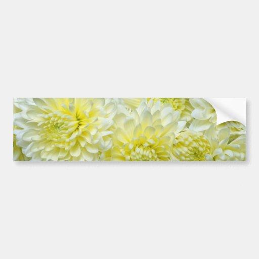 flores blancas amarillas de los crisantemos etiqueta de parachoque