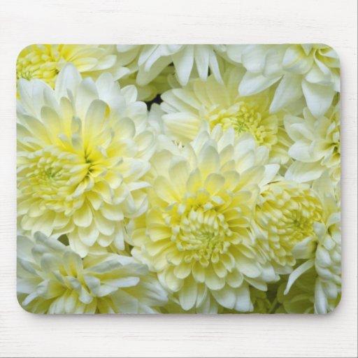flores blancas amarillas de los crisantemos tapete de ratón