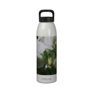 Flores blancas bonitas del guisante de olor botellas de agua reutilizables