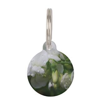 Flores blancas bonitas del guisante de olor placas para mascotas