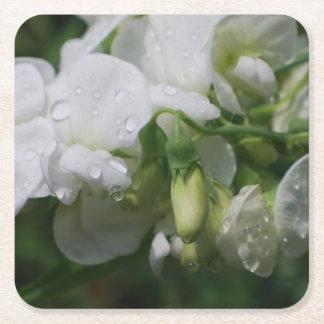 Flores blancas bonitas del guisante de olor posavasos desechable cuadrado