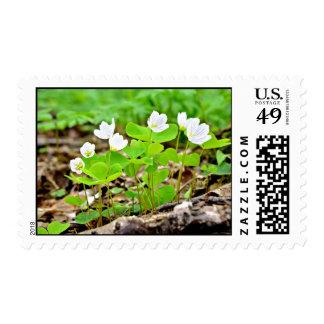 Flores blancas con las plantas verdes sellos