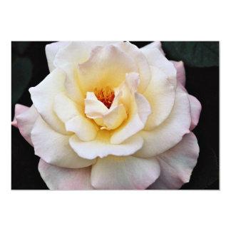 Flores blancas de Floribunda Comunicado