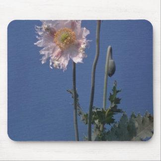 flores blancas de la amapola de opio (Papaver - so Tapete De Raton