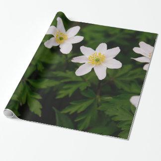 Flores blancas de la anémona de madera, foto papel de regalo