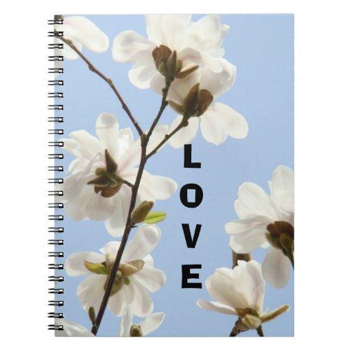 Flores blancas de la magnolia del cielo azul del c