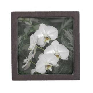 Flores blancas de la orquídea cajas de regalo de calidad