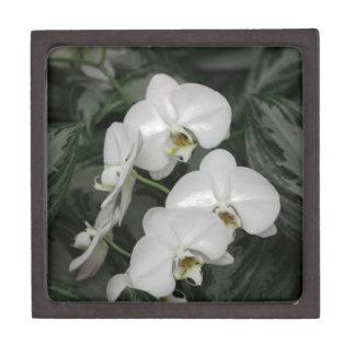 Flores blancas de la orquídea cajas de joyas de calidad