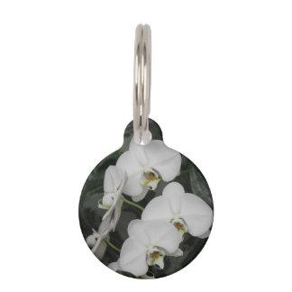Flores blancas de la orquídea placa de mascota