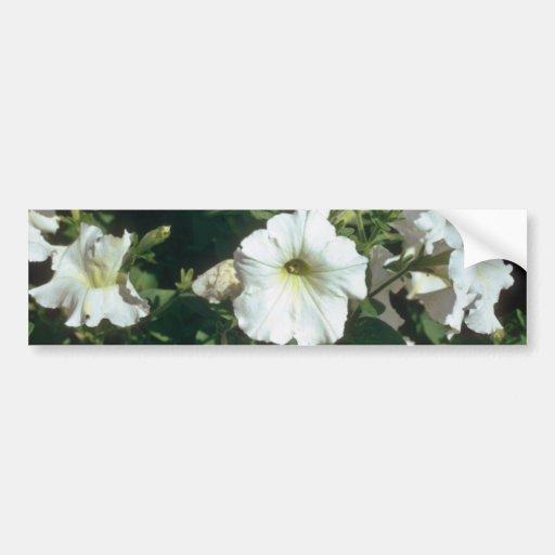 flores blancas de la petunia del jardín (petunia H Etiqueta De Parachoque