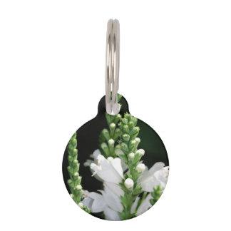 Flores blancas de la planta obediente placas para mascotas