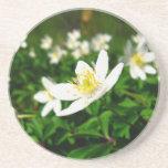 flores blancas de la primavera posavasos cerveza