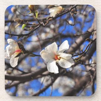 Flores blancas de la primavera posavasos de bebida