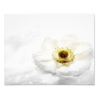 Flores blancas de las anémonas de madera de la fotografías