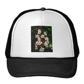 flores blancas de Ranida Formosa Gorros