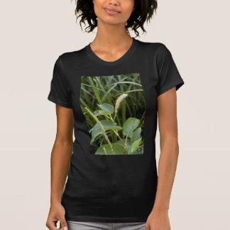 flores blancas del Agua-Dragón (Saururus Cernuus) Camiseta