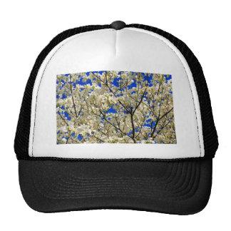 Flores blancas del árbol de Dogwood y cielo azul Gorras De Camionero
