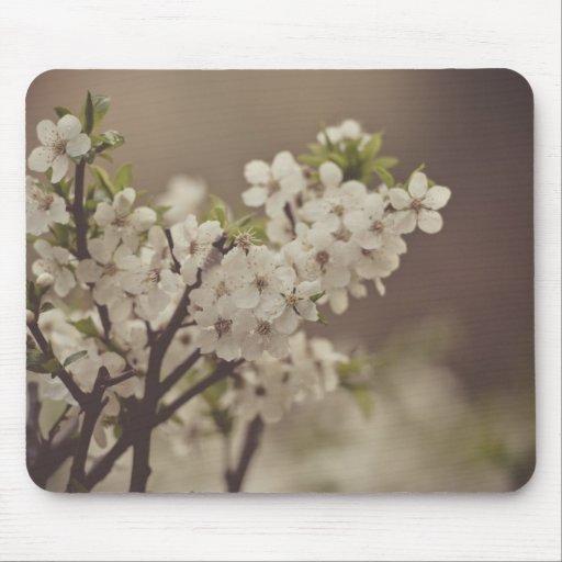 Flores blancas del árbol de la primavera tapete de ratones