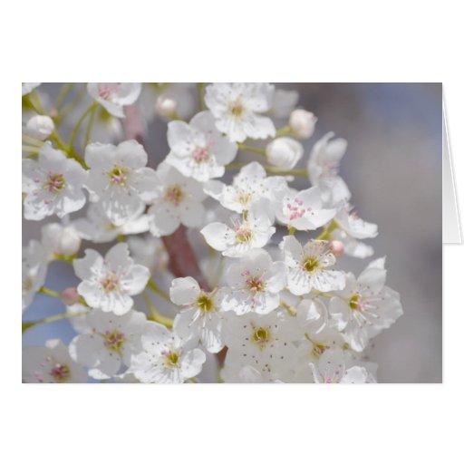 Flores blancas del árbol floreciente tarjeton