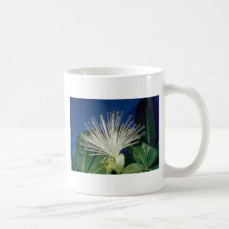 flores blancas del Bombax (aquatica de Pachira) Taza