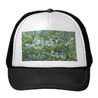 flores blancas del dogwood de la primavera gorro