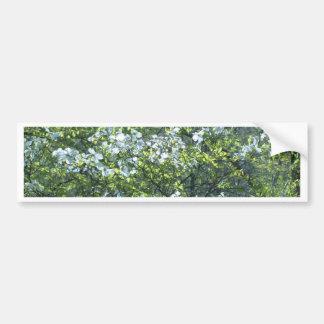 flores blancas del dogwood de la primavera pegatina para auto