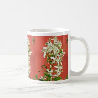 flores blancas del jazmín de estrella (pubescens taza clásica