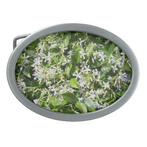 Flores blancas del jazmín hebillas de cinturón ovales