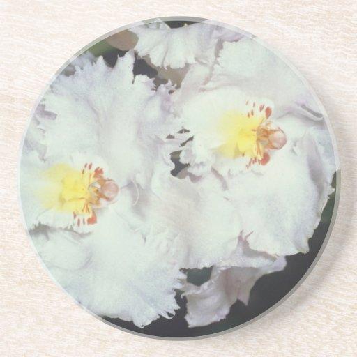 flores blancas del odontioda de la orquídea posavasos manualidades