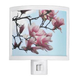 Flores blancas del rosa del árbol de tulipán de la lámpara de noche
