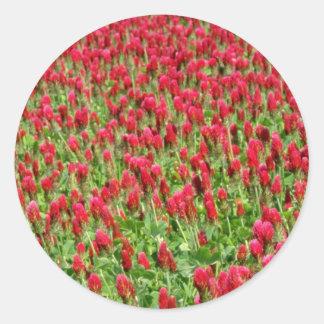 Flores blancas del trébol rojo pegatinas