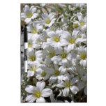 Flores blancas del verano pizarra