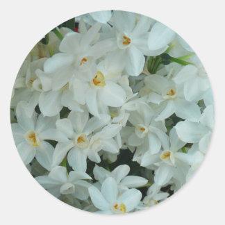 Flores blancas delicadas del narciso de Paperwhite Pegatina Redonda