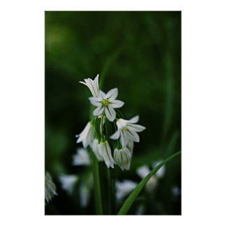 Flores blancas dulces póster