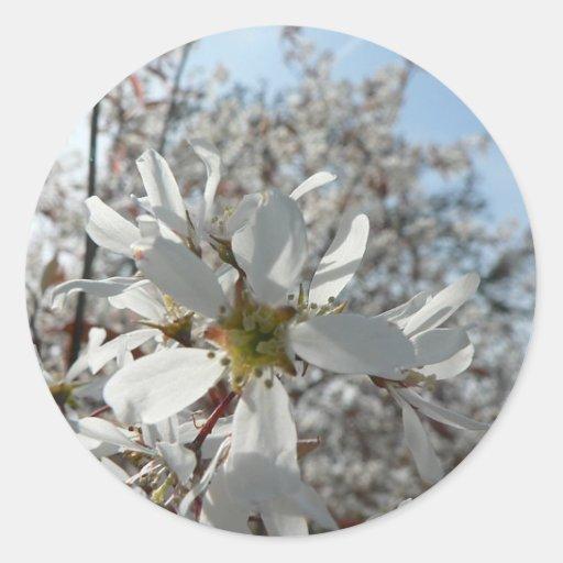 Flores blancas en Bush Pegatina Redonda