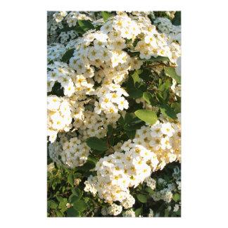 Flores blancas en un arbusto en el parque papeleria