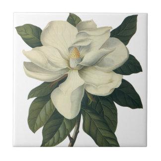 Flores blancas florecientes del flor de la azulejo cuadrado pequeño
