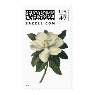 Flores blancas florecientes del flor de la estampilla