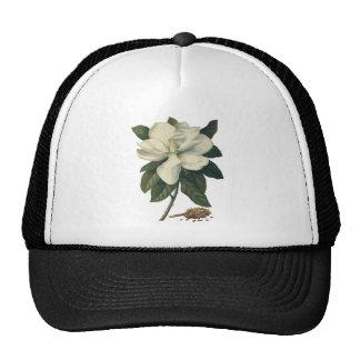Flores blancas florecientes del flor de la gorros