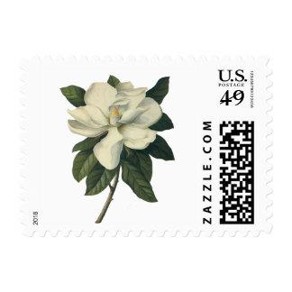Flores blancas florecientes del flor de la sello