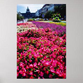 Flores blancas, flores cuadradas de Wencelas Poster