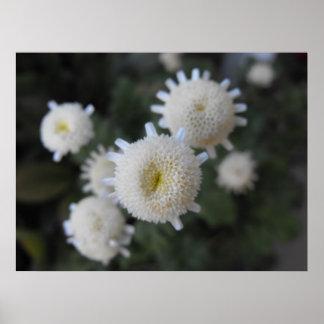 Flores blancas flotantes póster