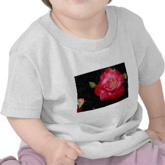 """Flores blancas híbridas de """"Brigadoon"""" del rosa de Camisetas"""