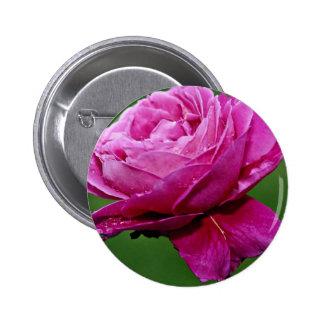 """Flores blancas híbridas de la """"herencia"""" del rosa  pins"""