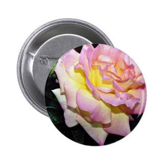 """Flores blancas híbridas de la """"paz"""" del rosa de té pins"""