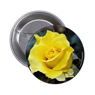 """Flores blancas híbridas de """"Lanvin"""" del rosa de té Pins"""