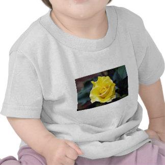 "Flores blancas híbridas de ""Lanvin"" del rosa de té Camisetas"