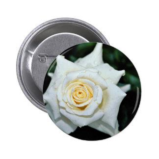 """Flores blancas híbridas de """"Lenip"""" del rosa de té  Pins"""