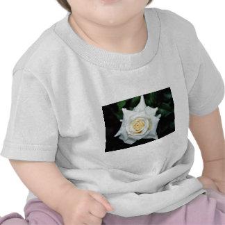 "Flores blancas híbridas de ""Lenip"" del rosa de té Camiseta"